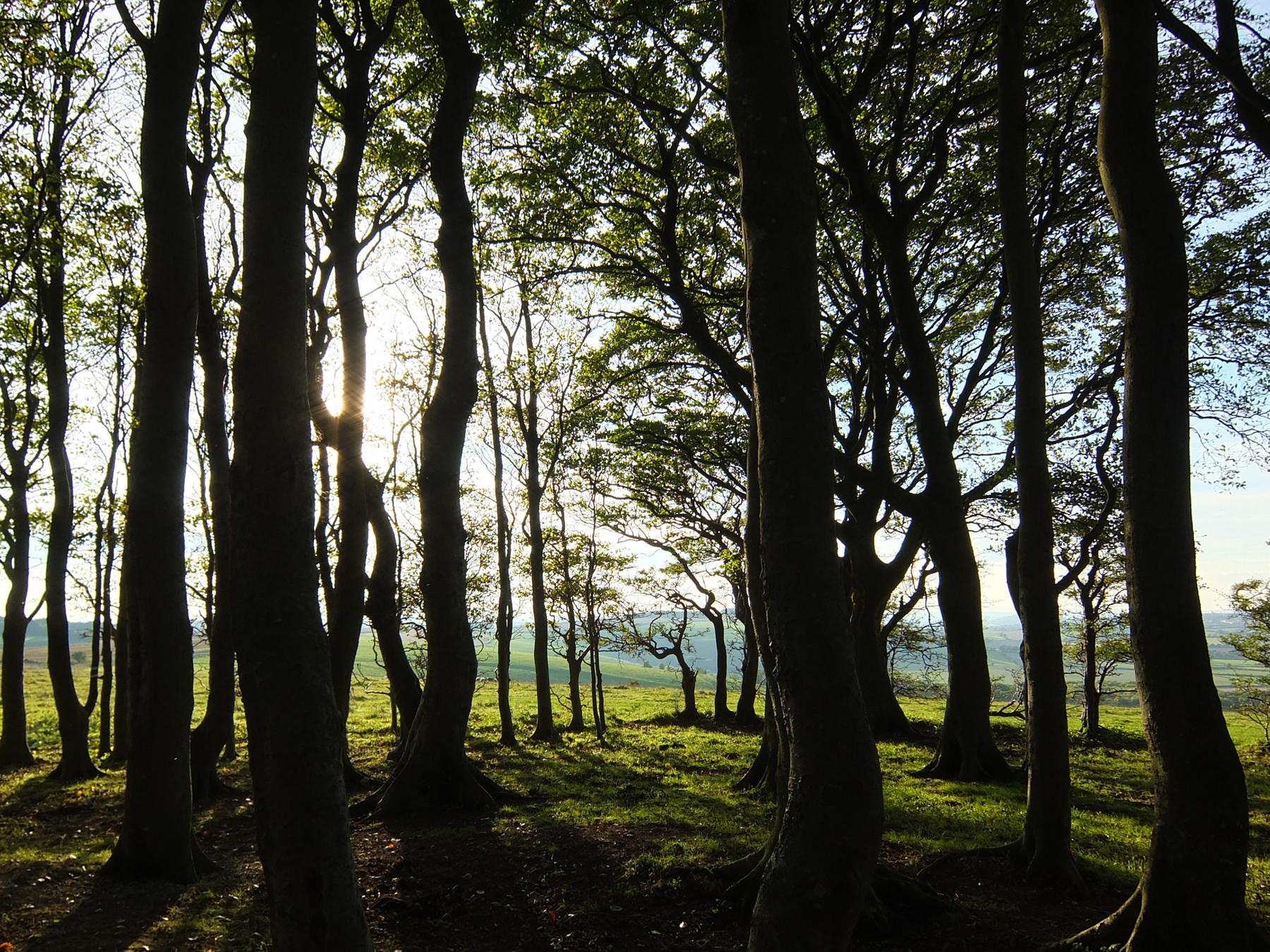 treescenary
